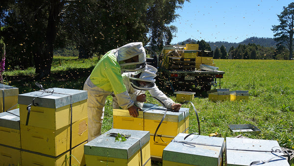 3Beekeepers Spring into action!
