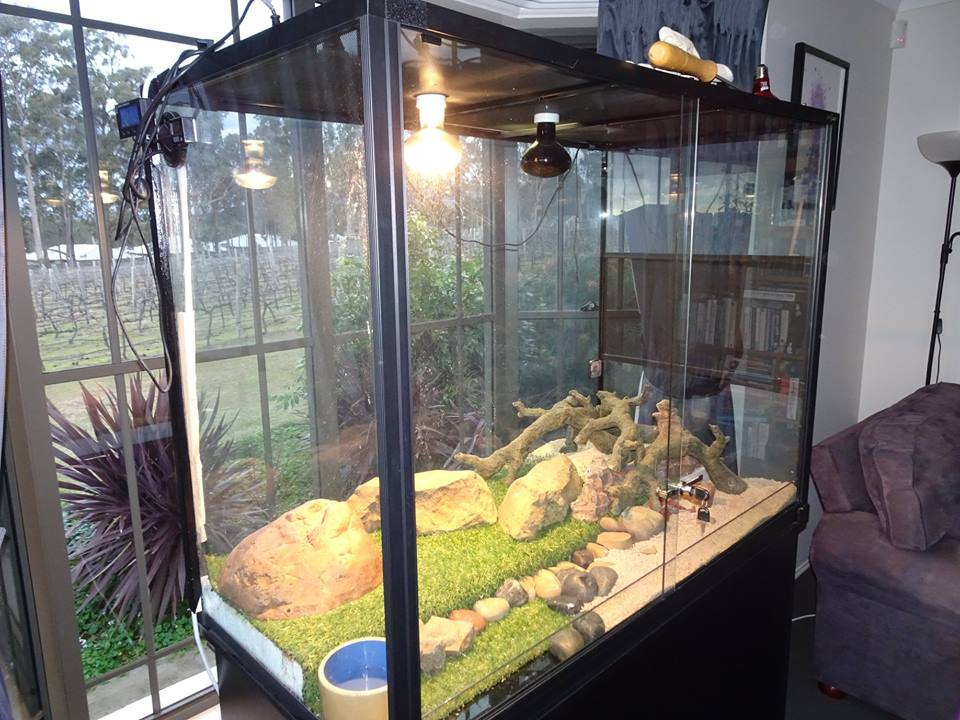 Reptile Enclosure Set up Tips - get it right and your pets will thrive!