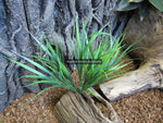 Artificial Grass Plant 30cm