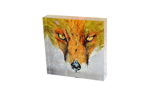 Fragmented Fox