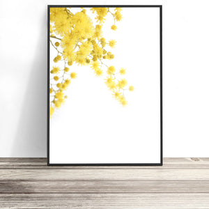 Wattle art print native australian flower art