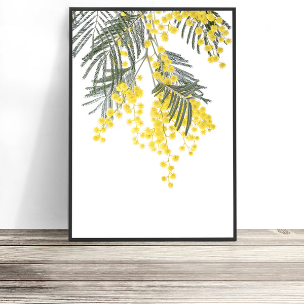 Wattle artwork australian flora prints australian native print