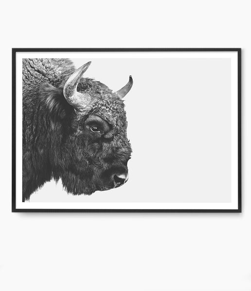 american buffalo art buffalo photo bison photo