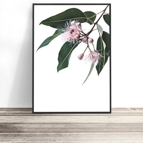 australian native flower prints Eucalyptus flower print