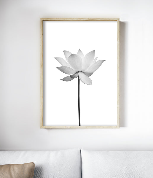 black and white flower art print australia
