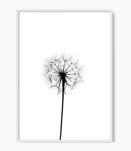 black and white flower print dandelion art