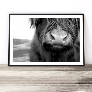 black and white highland cow print australia