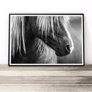 black and white horse photography print