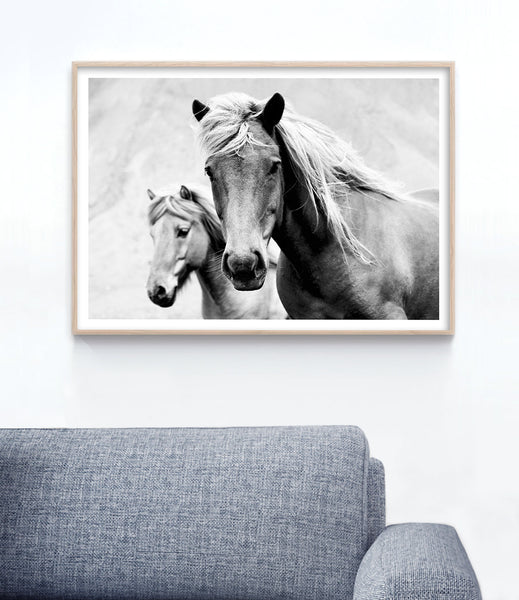 black and white horse wall art australia