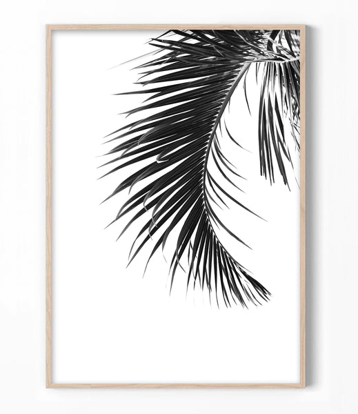 black and white palm leaf print tropical wall art