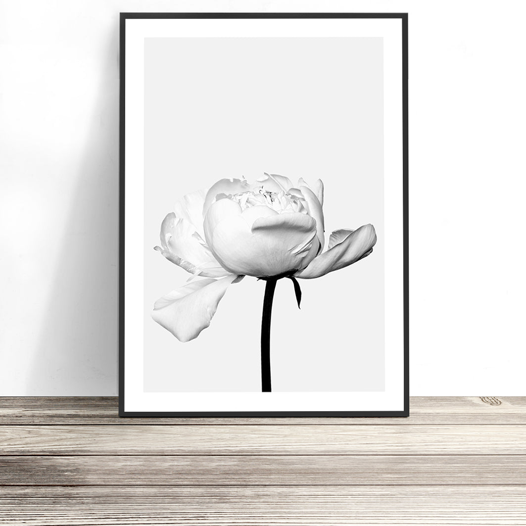 black and white peony print australia