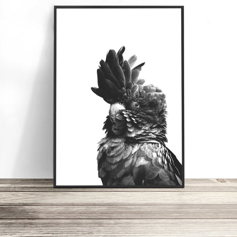 black cockatoo print australian bird art
