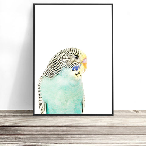 budgie art native australian bird prints