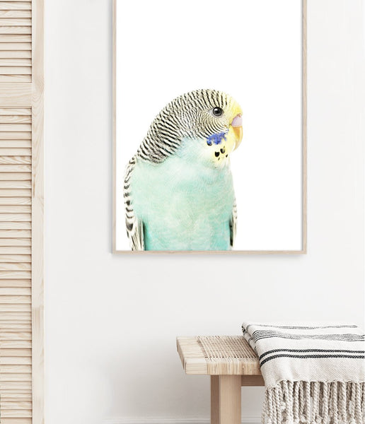 budgie artwork australian animal prints australian bird art budgerigar art