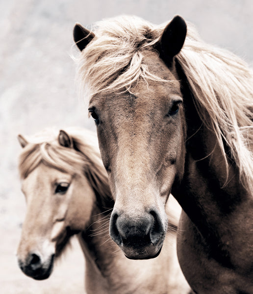 Wild Horses Photography Print (Colour)
