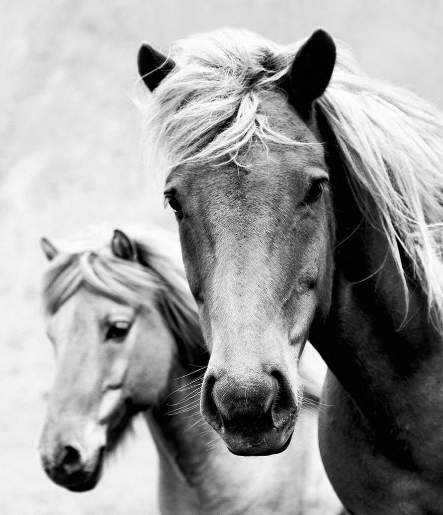 Wild horses photography print black and white