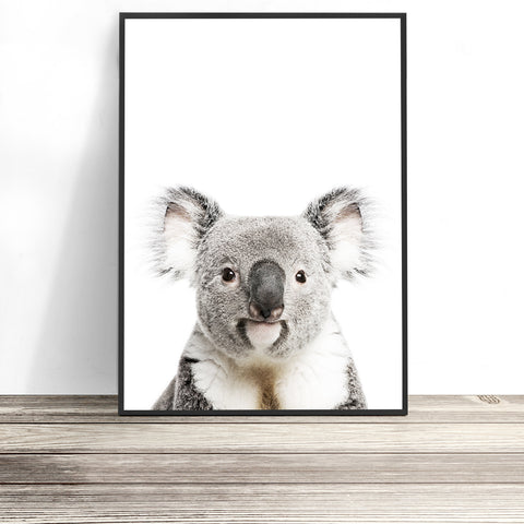 colour koala print australian animal art koala wall art