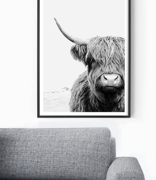 cow art cow print highland cow photography