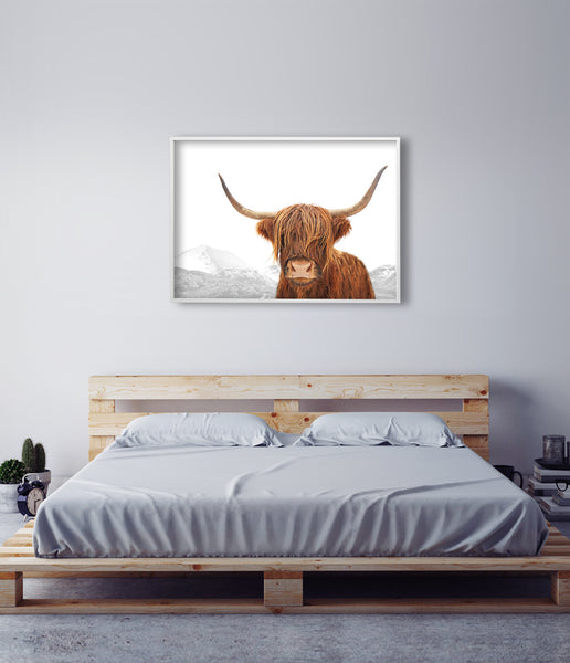 highland cow art photography
