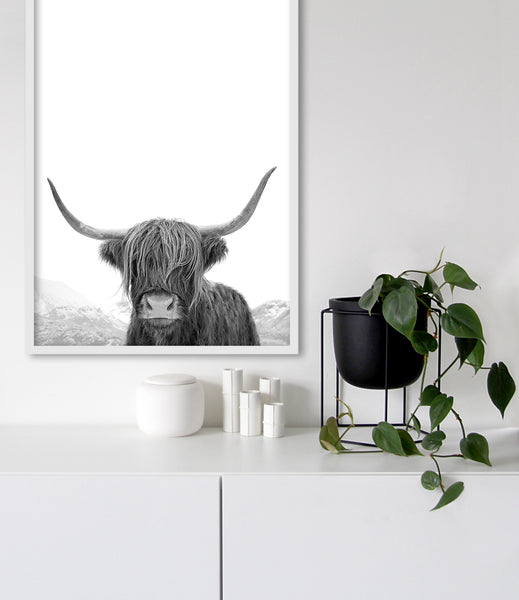 highland cow photography black and white print