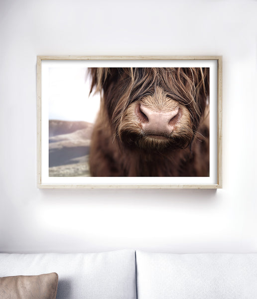 highland cow poster prints of highland cattle