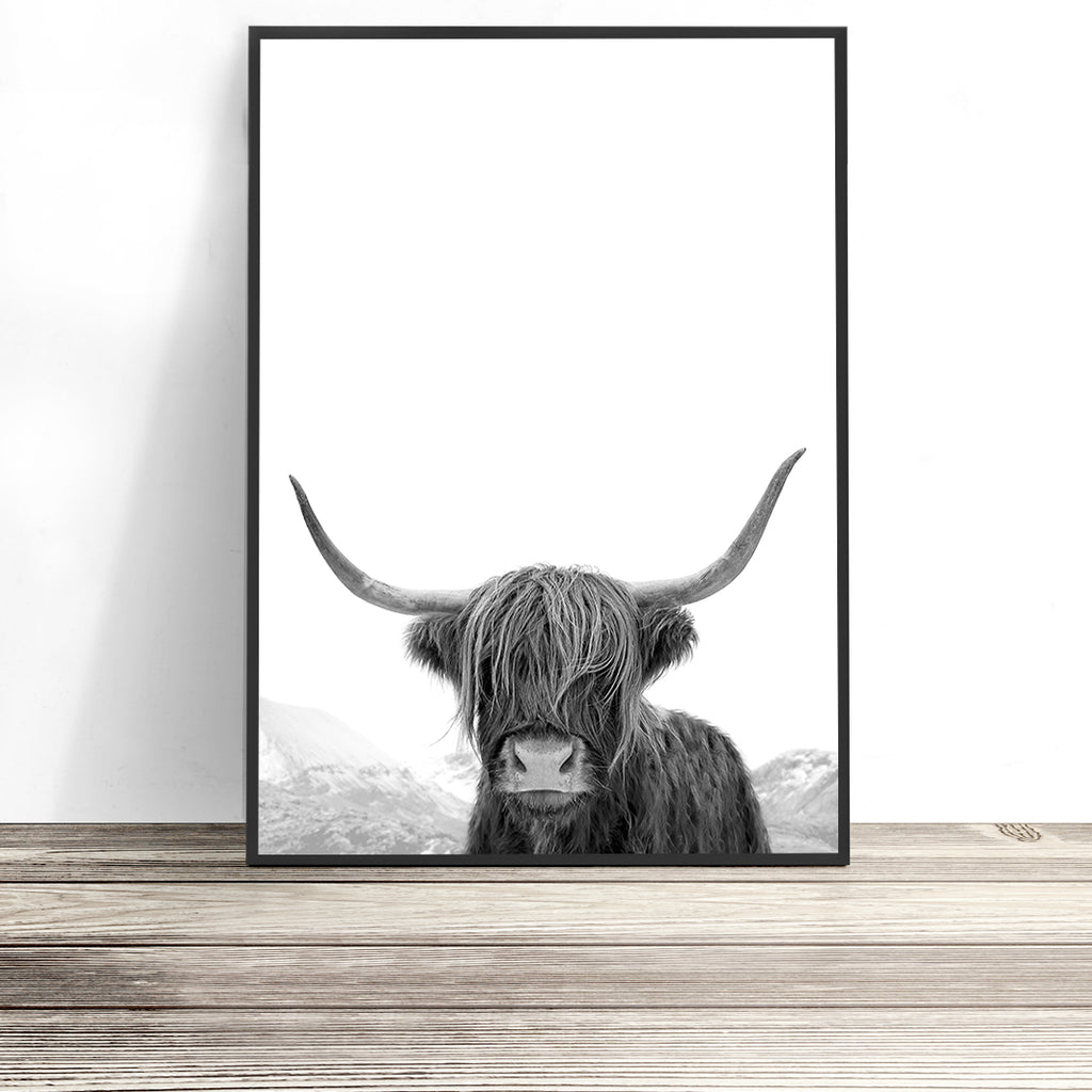 Highland cow photography black and white portrait