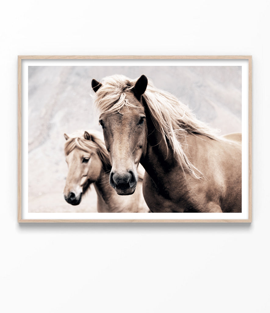 Wild Horses Photography Print Horse Art Print Little Ink Empire