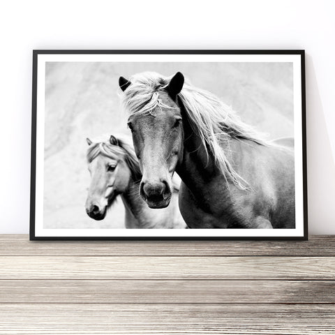 horse photography black and white australia horse print