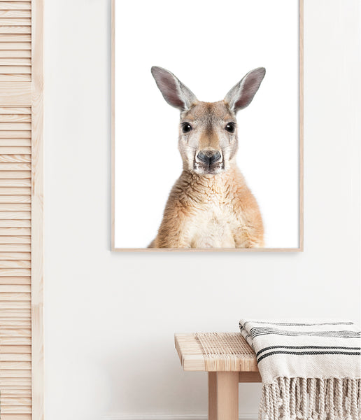 kangaroo art australian animal print