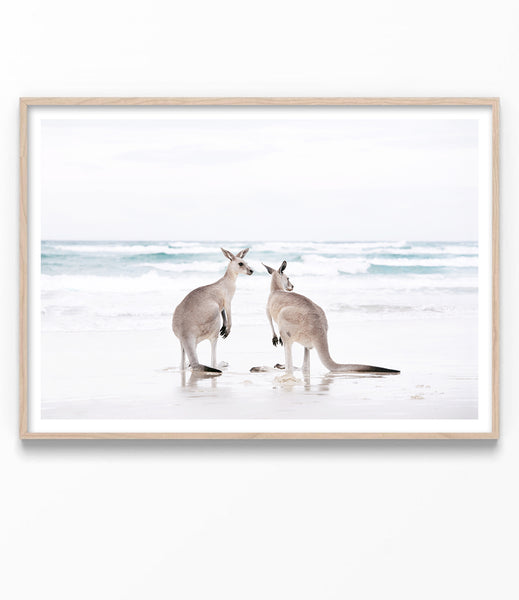kangaroo print australian animal art