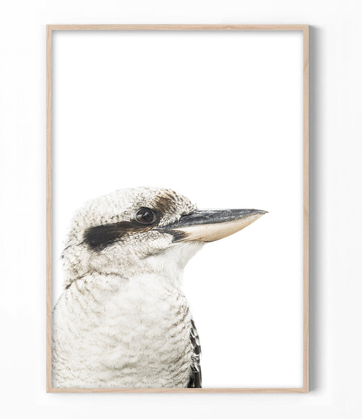 kookaburra art print australian bird wall art