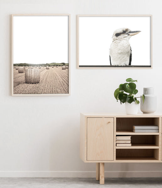 kookaburra wall art australian bird print australian animal art