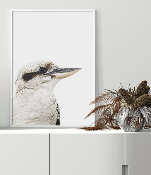 kookaburra wall art australian bird prints