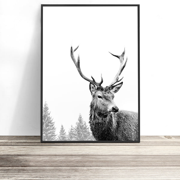 black and white large deer print australia contemporary stag print