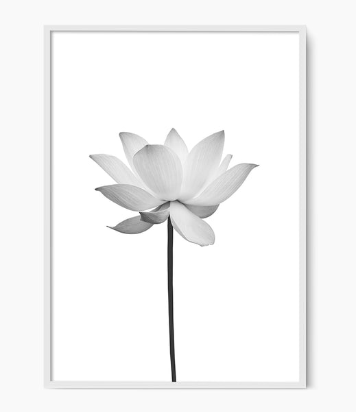 lotus print black and white flower print
