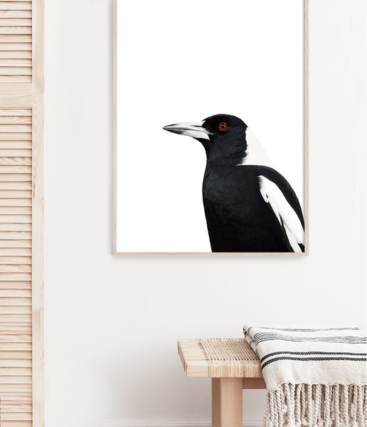 magpie art native australian bird print