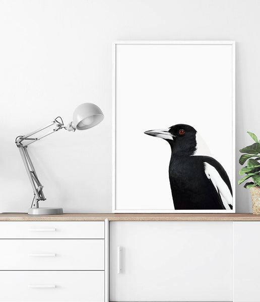 magpie artwork australian native bird prints