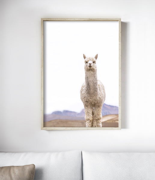 llama wall art modern animal art print