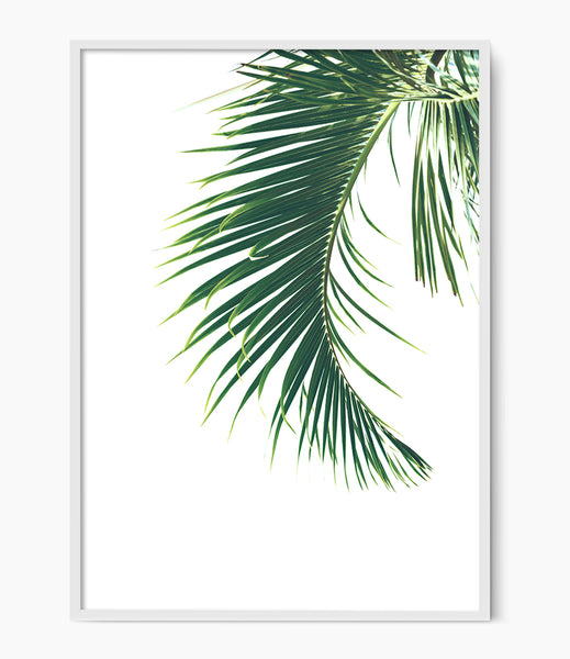 palm leaf photography print palm wall art