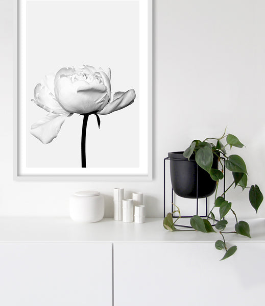 peony print flower photography print black and white prints australia