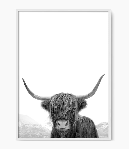 black and white highland cow art