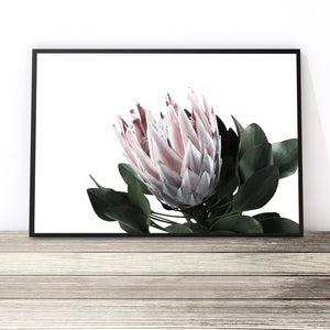 protea art print flower wall art