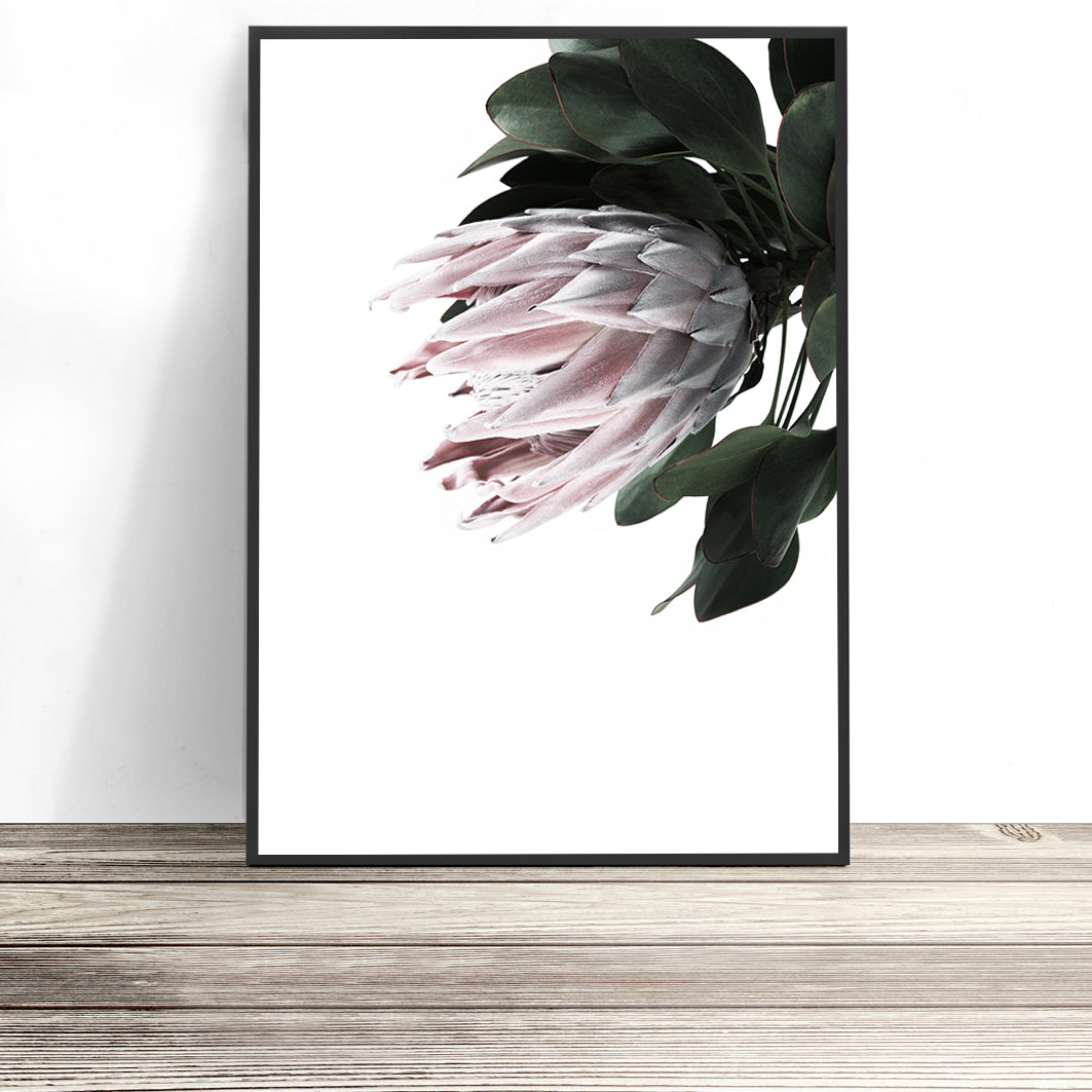 protea wall art print flower photography print