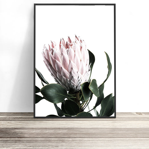 protea wall art flower print