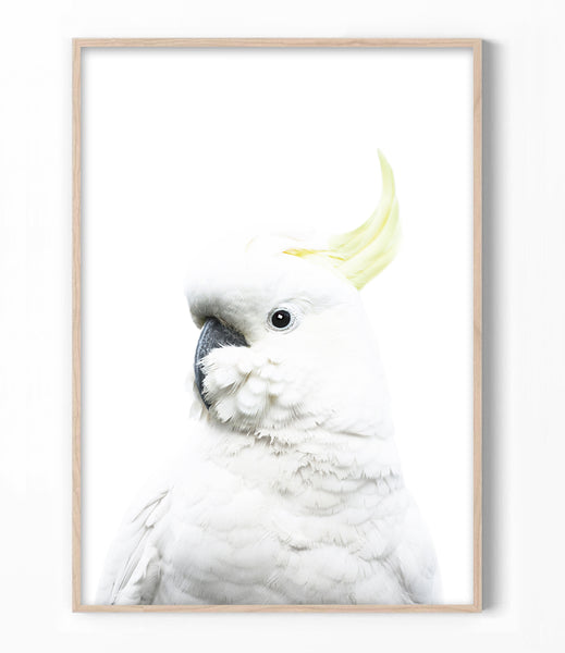 white cockatoo art print parrot wall art australia