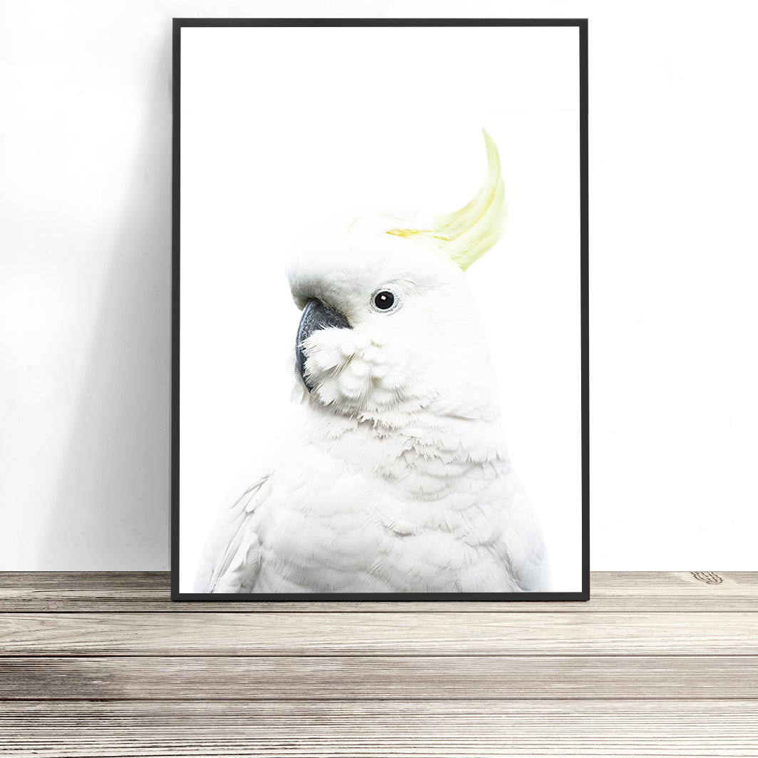 white cockatoo print australia cockatoo wall art