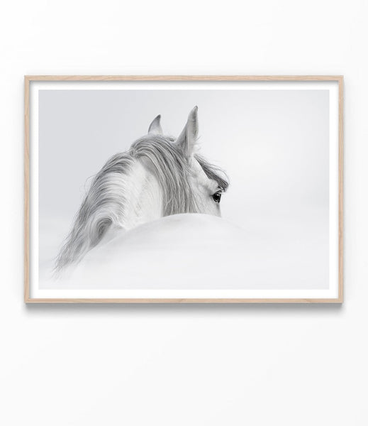 black and white horse print australia