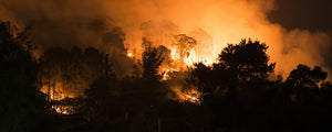 PNP Golf and the Australian Bushfires