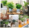 Image of Automatic Watering Planter Pots