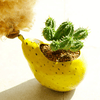 Image of Small Pear Shaped Ceramic Succulent Planter Pot